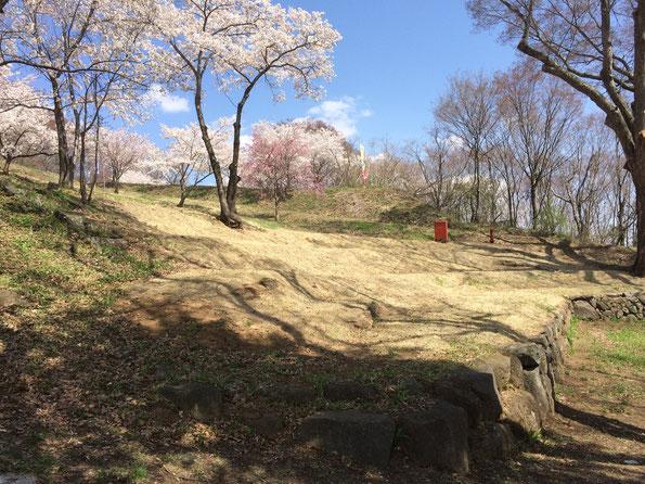 祢津の日吉神社裏、歌舞伎舞台付近の桜
