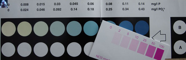 Farbskala von PO4 & NO3 Wassertests
