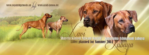 Azali Jamaa Wurfplanung Sommer 2014
