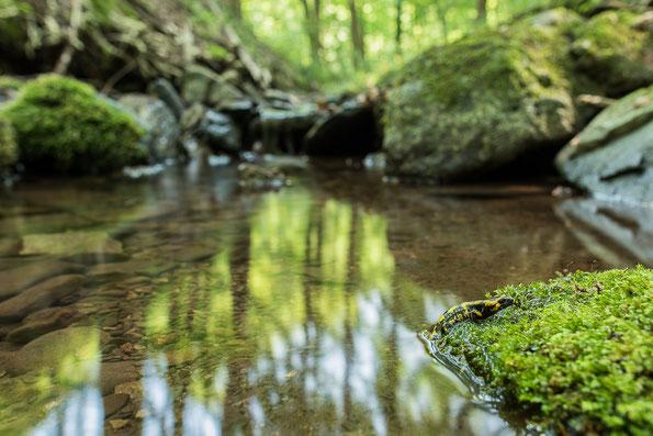 Jungtier verlässt Lebensraum Wasser