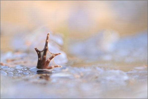 Hiiiilfe - rettet die Amphibien