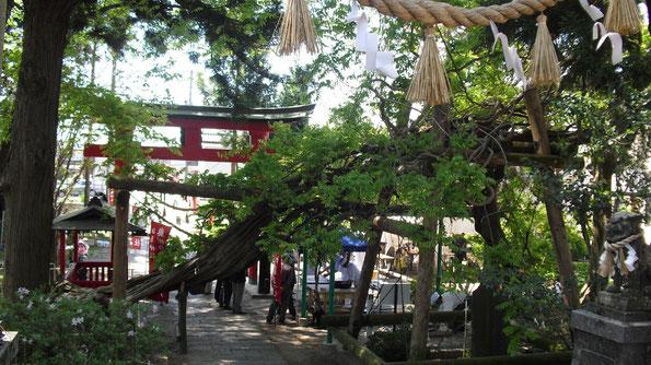 """Jafuji"" - draconic Japanese wisteria"