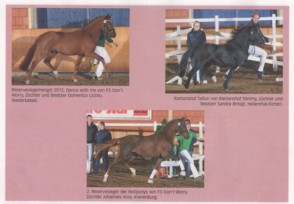 Rheinlands Reiter + Pferde / Dez. 2012 / Bild rechts: Ramonshof Taifun