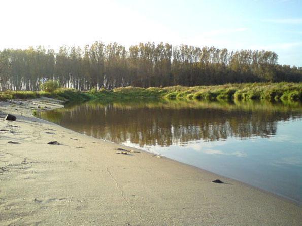 Baden am einsamen Sandstrand der Elbe