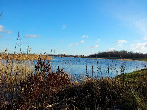 Ufer der Elbauen in der Altmark