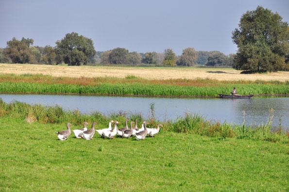 Angeln vom Kanu aus in der Elbe