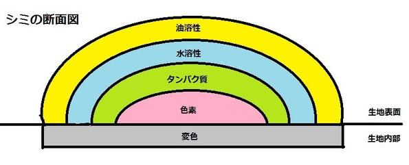シミの断面図