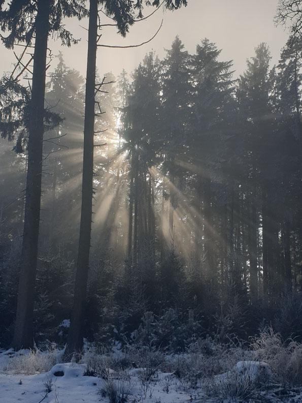 Winterwald - Sonnenstrahlen durch Bäume