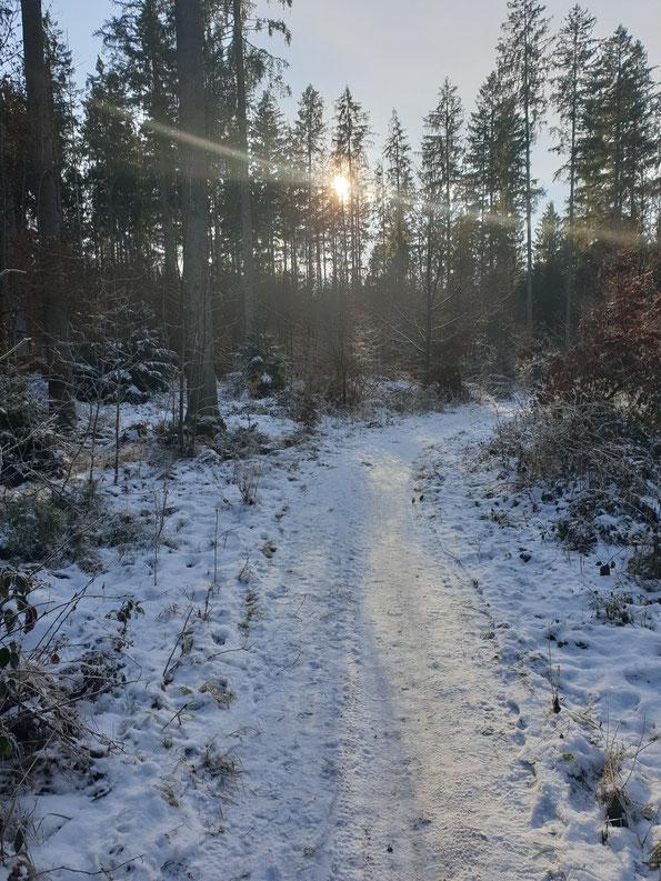 schneebedeckter Weg im Wald, Sonne durch die Bäume