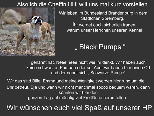 Continental Bulldoggen Zucht, Züchter, Welpen, Brandenburg, Berlin, Sachsen, Sachsen Anhalt, Thüringen, Mecklenburg