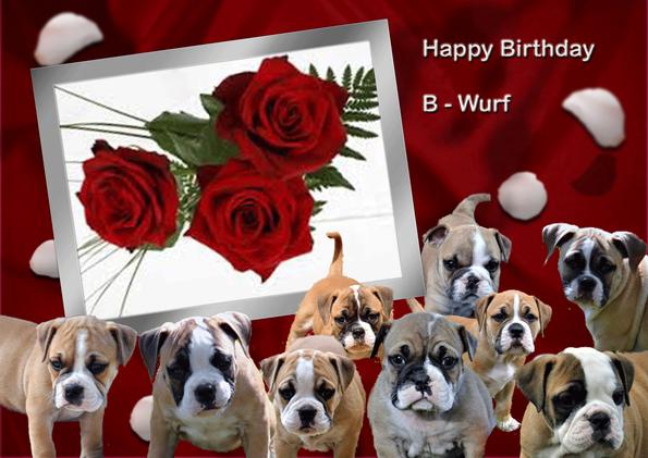 Continental Bulldog Geburtstag
