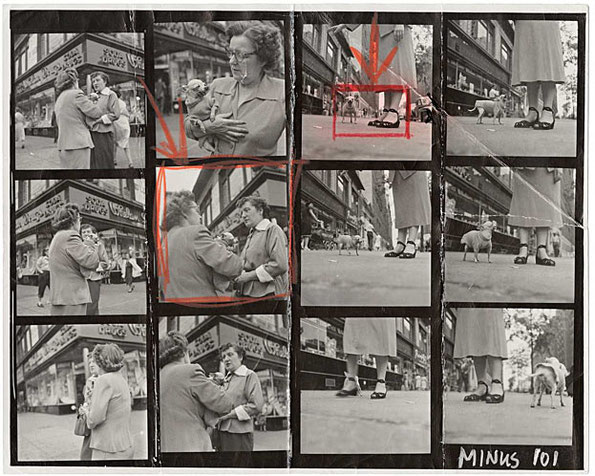 Contact Sheet/ELLIOTT ERWITT: A sweatered Chihuahua, New York City, 1946