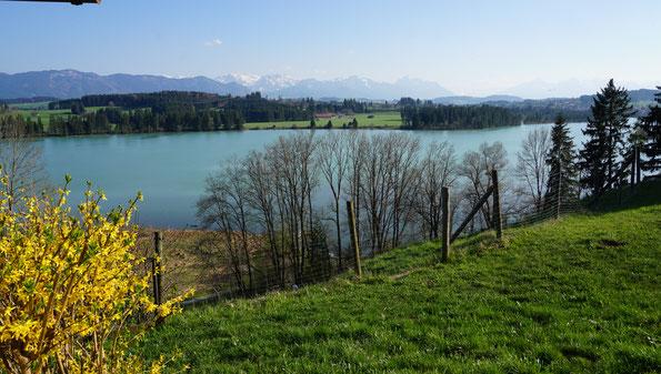 Blick auf Ammergebirge und See