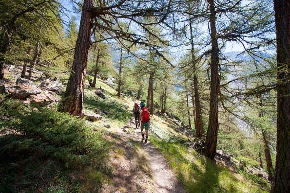 Noch laufen wir im schattigen Wald