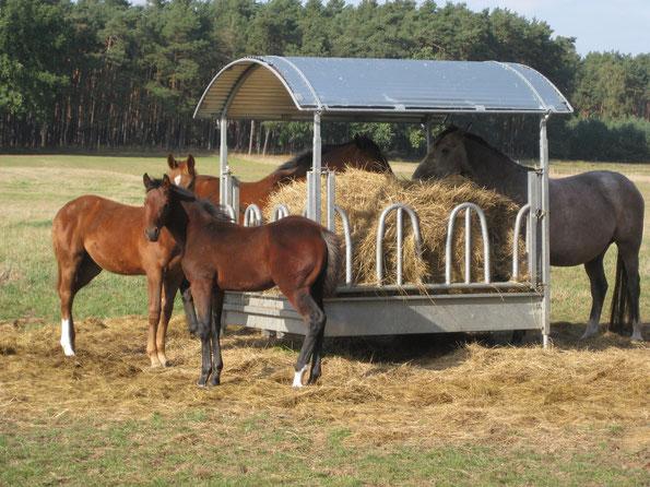 Pferdehof Leue Training auf dem Reitplatz