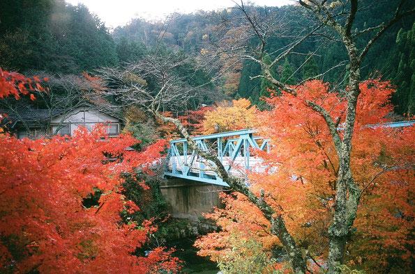 紅葉の奥津峡
