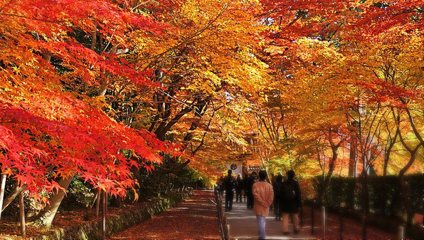 Great season in Japan is autumn. Agree? Source: wikipedia