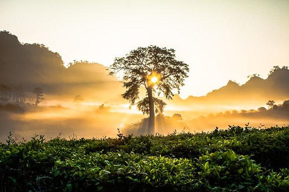 Gruß an die Morgendämmerung von Kalidasa