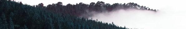 Linda Kess Website // Unersättlich - Im Herzen des Waldes