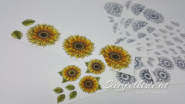 Gute Laune Gruss, Sonnenblume, Stempelkiste, Stampin Up