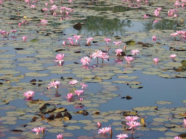 北インド・ピプラワー遺跡の蓮池