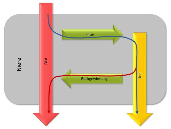 Grafik normale Nierenfunktion ohne Lesinurad