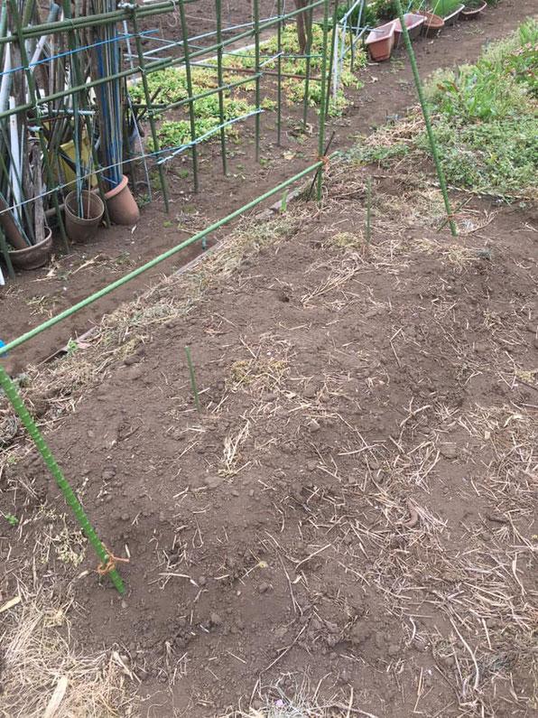 """""""ぐびっと農園"""" は個人でお借りしている市民農園のようなものですが、勝手に名付けて色々やっています。ホップを植えるのはこちら!"""