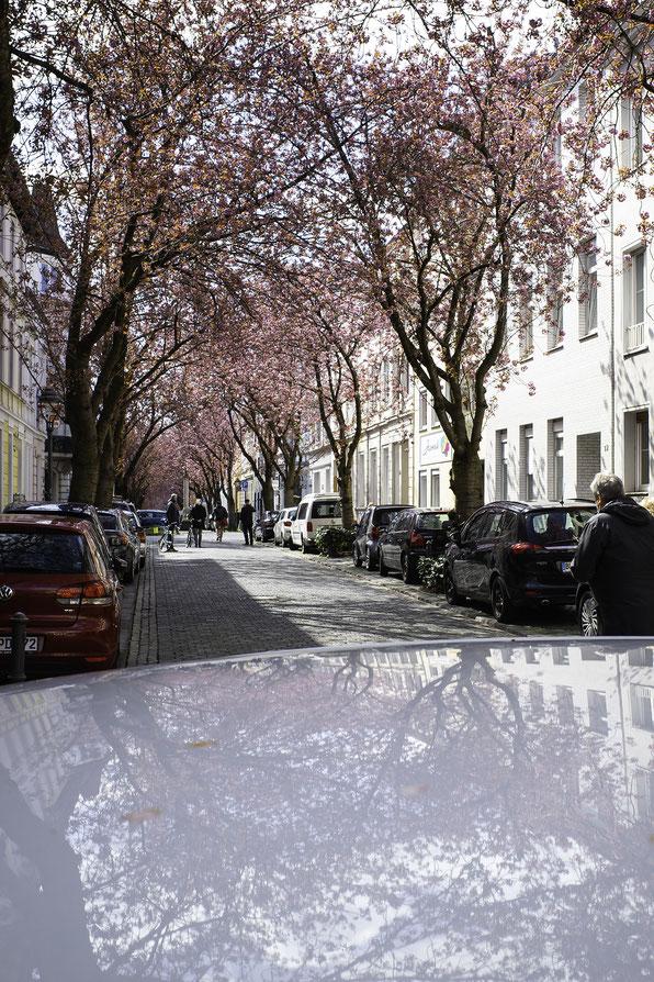 Bonn, Fineart, Ricoh, Ricoh GRiii, GRiii, GR3, Fineart Bonn, La Bonn heure, Kirschblüte Bonn, Heerstraße
