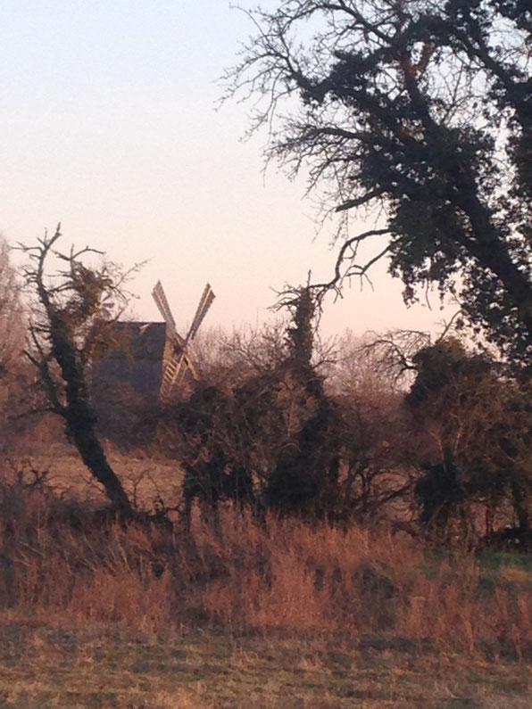 Mühle bei Petkus