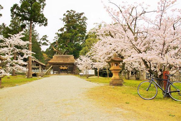 隠岐の島 京見屋分店 ブログ 玉若酢命神社の春
