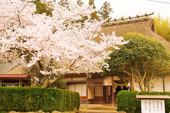 隠岐の島 京見屋分店 ブログ 玉若酢命神社