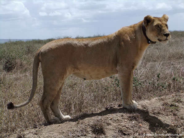Tansania - Serengeti