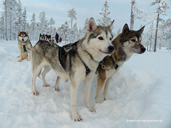 Finnland - Husky-Safari
