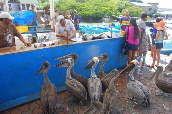 Santa Cruz  Fischmarkt