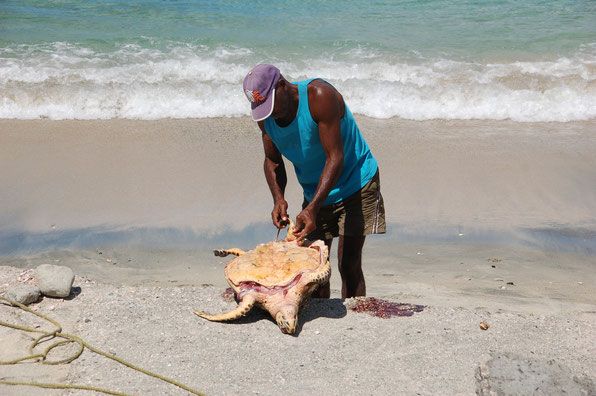 Auch Turtles werden gegessen. Zart und schmackhaft werden sie selten an Segler weiter gegeben.