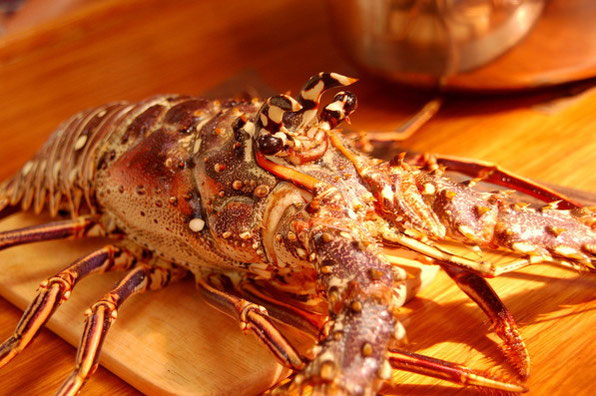 """JACK"" unser erster Lobster, kurz vor seinem Ableben........     Bequia, SVG"