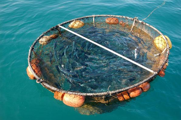 Fischfrischhaltekäfig auf Sao Nicolao / Cabo Verde
