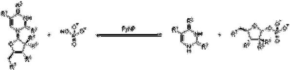 PyNP reaction