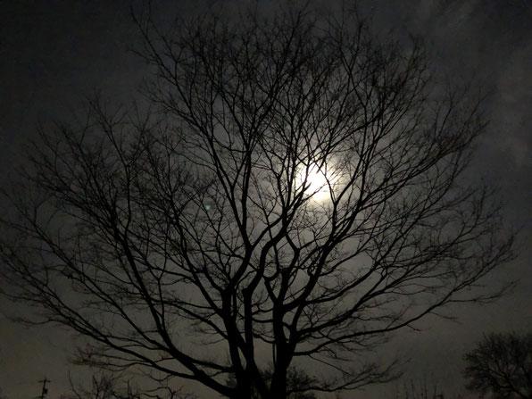 ほぼ満月だった3月20日。雲がかかっているけれど不思議に明るい夜で、タヌキでも出てきそうでした。