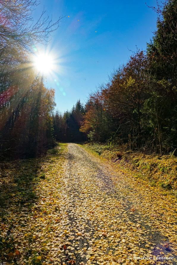 Herbst im Rotenhainer Wald