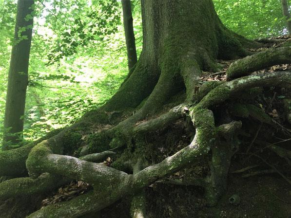 Waldbaden - Atmung und Yoga im Wald