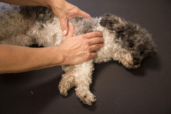 Manuelle Therapie beim Hund