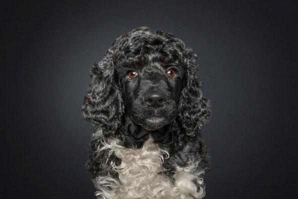 Rock a Dog's Aurel Against All Odds