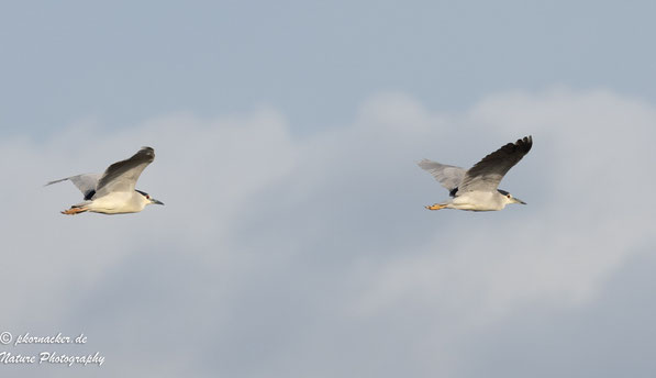 Paul Kornacker,Olympus Visionary,M.Zuiko Digital ED 150-400mm F4.5 TC1.25x IS PRO,Testbericht,Namibia,OM-D-E-M1X,Bird-Tracking, Vogelerkennung,Nachverfolgung