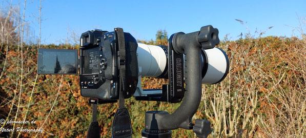 Paul Kornacker,Olympus Visionary,M.Zuiko Digital ED 150-400mm F4.5 TC1.25x IS PRO,Testbericht,Namibia,OM-D-E-M1X, Gimbal