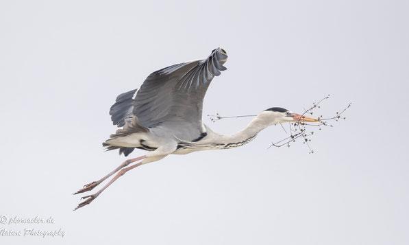 Paul Kornacker,Olympus Visionary,M.Zuiko Digital ED 150-400mm F4.5 TC1.25x IS PRO,Testbericht,Namibia,OM-D-E-M1X, Silberreiher,Bird-Tracking