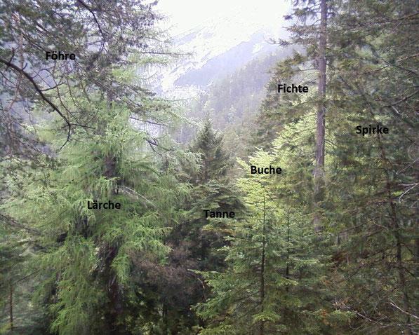 Mischwald ca.1500m - Frühjahr Mitte Mai