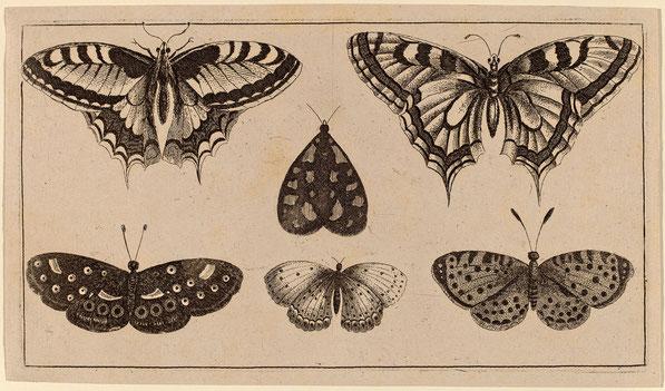 Пять бабочек и мотыльков