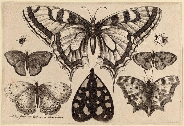 Пять бабочек, Мотылек, и двух Жуков