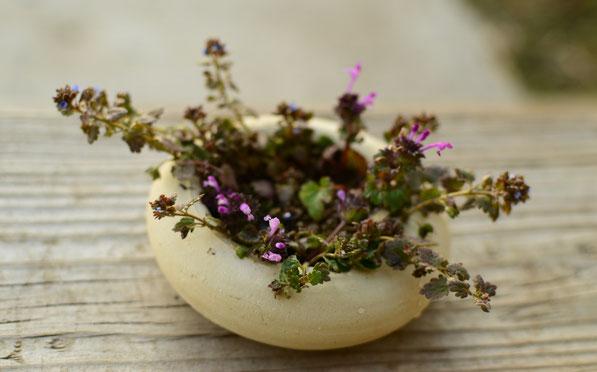the monday vase - wildflowers